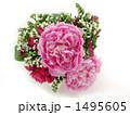 牡丹と薔薇~白背景 1495605