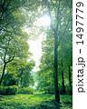 静寂の森 1497779