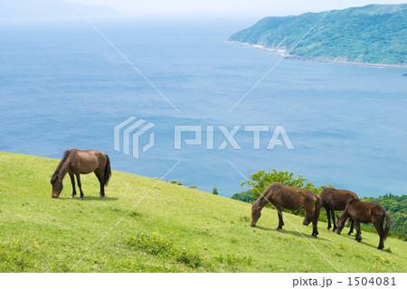 海辺の丘の野生馬達 1504081