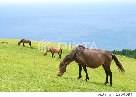 海辺の丘の野生馬三頭 1504094
