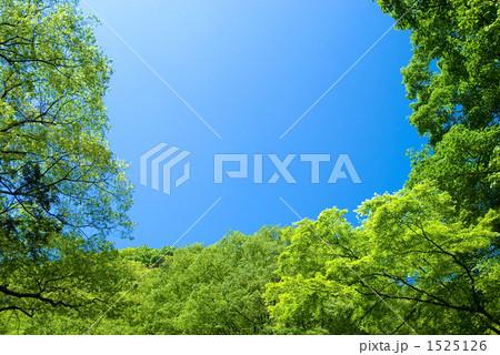 新緑の森と青空 1525126