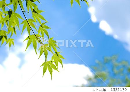 カエデの葉と空 1525170