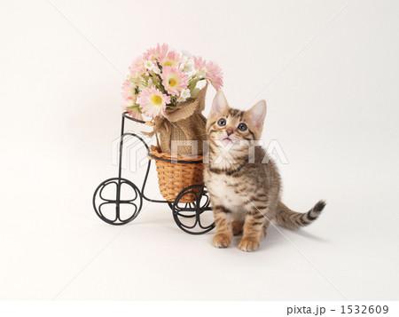 花と子猫の写真素材 [1532609] - PIXTA