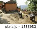 ネパール トレッキング 1536932