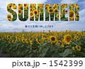 ひまわり_SUMMER 1542399