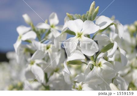 花畑のストック 1559159
