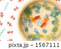 魚類 淡水魚 きんぎょの写真 1567111