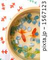 魚類 淡水魚 きんぎょの写真 1567123