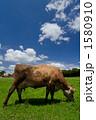 放牧 1580910