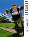放牧 1580913