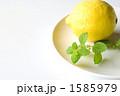 レモン レモンバーム 葉の写真 1585979