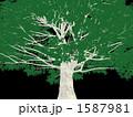 巨木 1587981