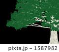 巨木 1587982