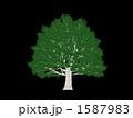 巨木 1587983