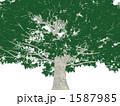 巨木 1587985