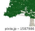 巨木 1587986
