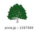 巨木 1587989