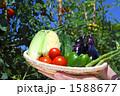アスパラ ピーマン ミニトマトの写真 1588677