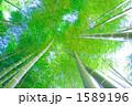 たけ タケ 竹やぶの写真 1589196