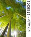 たけ タケ 竹やぶの写真 1589201