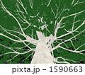 巨木 1590663
