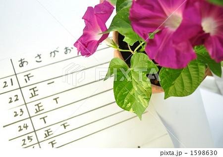 夏休みの宿題!朝顔の花の数調べ 1598630