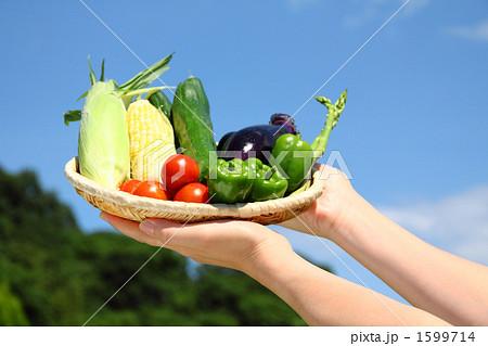 採れたて夏野菜と青空 野菜の盛り合わせ1 1599714