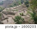 ネパール 段々畑 1600203