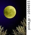 満月とススキ 1604655