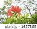 レンゲツツジ 自然 花の写真 1627365
