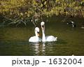 白鳥 1632004