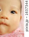 顔 目 子供の写真 1637344