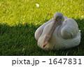 羽休め 1647831