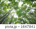 木漏れ日 1647841