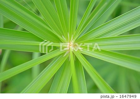 葉 観葉植物 緑の葉  壁紙 癒し 1647949