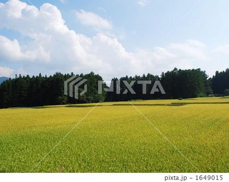 黄金色に広がる田園風景 1649015