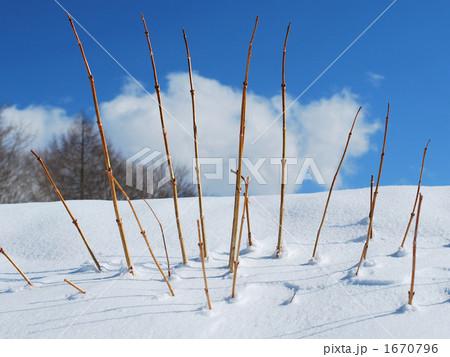 積雪から覗く枯れ枝 1670796