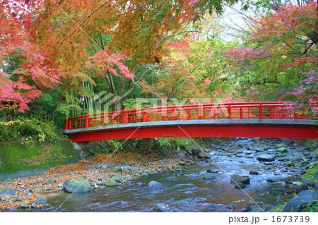 秋の修善寺川の写真素材 [167373...