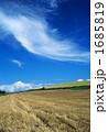晩夏の雲Ⅱ 1685819