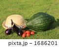 夏野菜 1686201