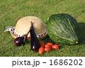 夏野菜 1686202
