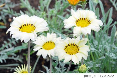 4輪の花 1703572