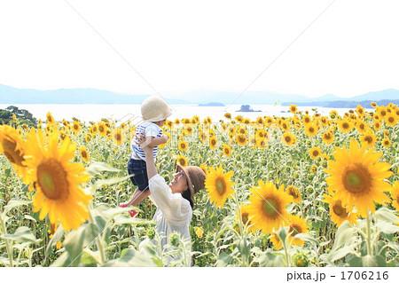 宮城県南三陸町歌津泊浜 海の見えるひまわり畑 1706216