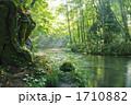 朝日の差し込む奥入瀬川 石ヶ戸の瀬 1710882