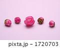 さざんか 五個 山茶花の写真 1720703