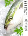ハマチ ぶり 鮮魚の写真 1738156