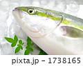 ハマチ ぶり 鮮魚の写真 1738165