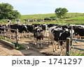 ホルスタイン 乳牛 家畜の写真 1741297