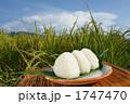 白米 豊作 食べ物の写真 1747470