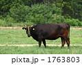黒毛和牛 1763803